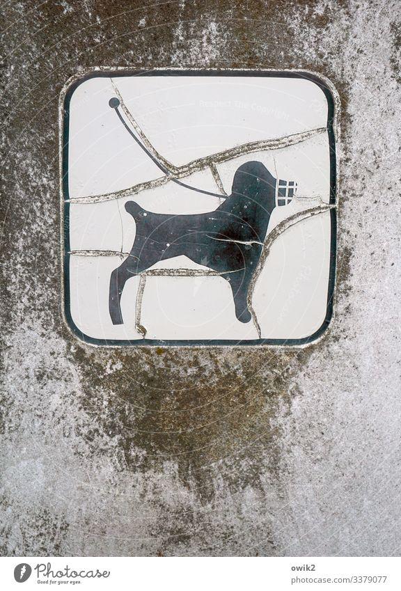 Hundeleben 1 Tier Kunststoff Zeichen Schilder & Markierungen Hinweisschild Warnschild alt Verfall Zerstörung Leinenzwang Hundeleine Maulkorb Piktogramm