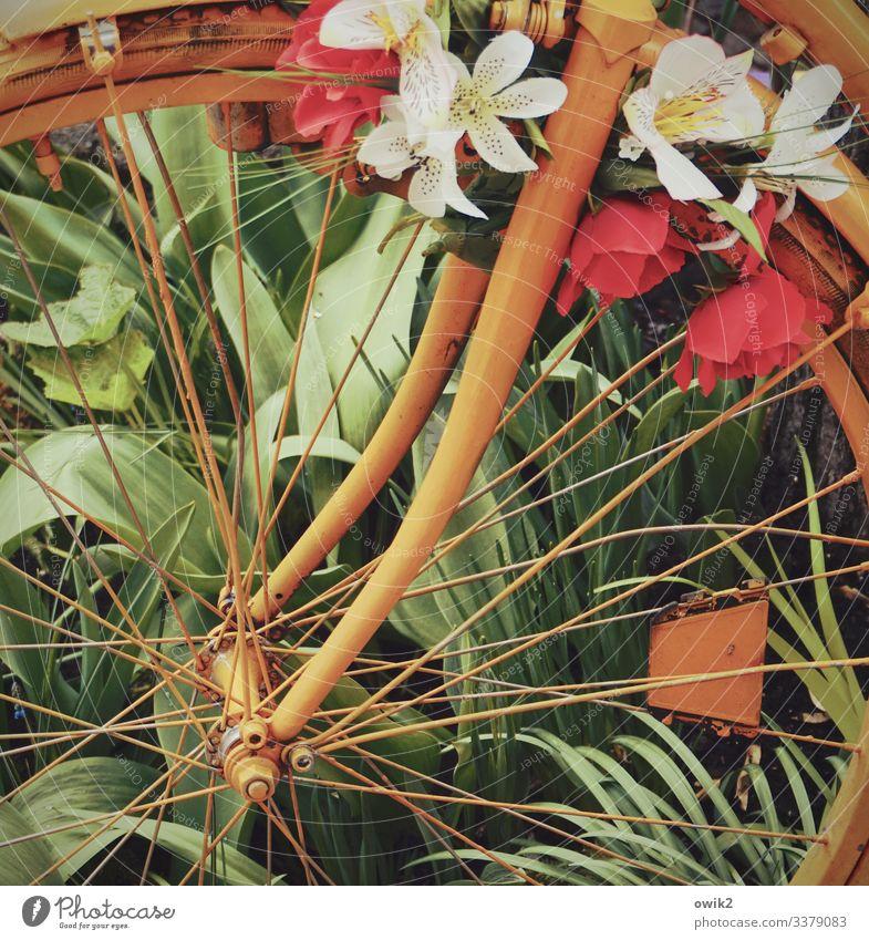 Im Großstadtdschungel Pflanze Sommer Blume Gras Blatt Blüte Berlin-Mitte Fahrradfahren Fahrzeug Rad Speichen Nabe Metall Kunststoff Blühend mehrfarbig grün