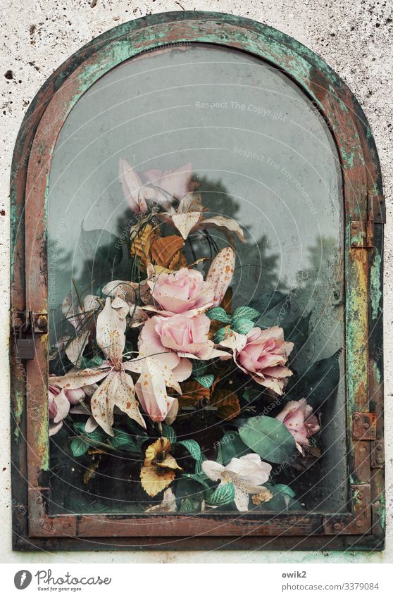 Arrangschmang Wolkenloser Himmel Baum Blume Blatt Blüte Zentralfriedhof Fenster Kitsch Krimskrams Grabstein Stein Glas Metall Kunststoff Blühend trösten
