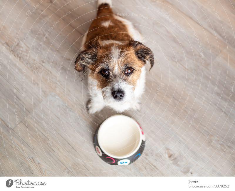 Hungriger Hund vor einem leeren Hundenapf Tier Haustier Tiergesicht Fell Hundeauge 1 Fressnapf Diät Fressen Vorfreude Tierliebe Appetit & Hunger Sorge betteln