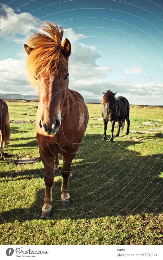 Sturmfest Natur Landschaft Tier Himmel Wolken Wind Nutztier Wildtier Pferd Tiergesicht 2 Tiergruppe Herde stehen warten ästhetisch Freundlichkeit lustig