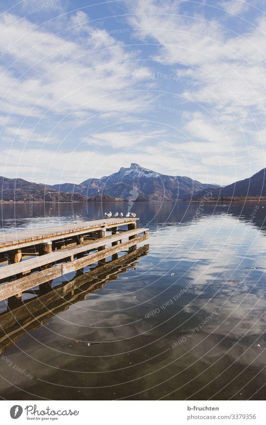Möwen am Steg, Gebirge im Hintergrund See Möwenvögel holzsteg wasser alpen gebirge berge wolken spiegelung mondsee Österreich Salzkammergut Berge u. Gebirge