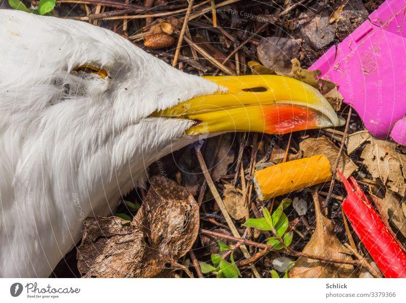 Makro des Kopfes einer verendeten Möwe mit Zigarettenkippe und Plastikmüll Tier Totes Tier 1 Müll Kunststoff Zigarettenstummel Umwelt Umweltverschmutzung