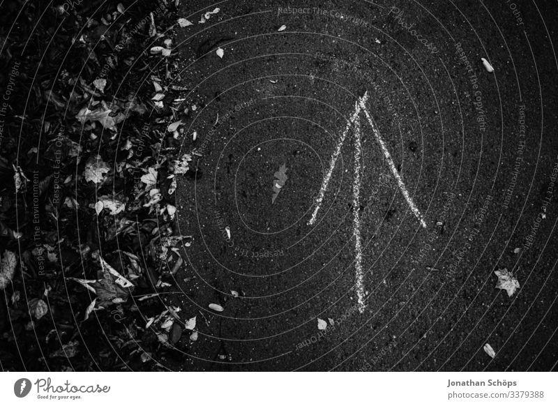 Pfeil auf Waldweg zeigt nach oben Abstrakter schwarzer Hintergrund Achtsamkeit Außenaufnahme Besinnung Chemnitz Darkmode Herbst Jahreszeit Laub