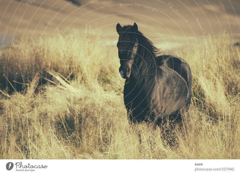 Schön Schwarz Natur schön Landschaft Tier schwarz gelb Wiese Freiheit natürlich Stimmung Feld Wind wild Wildtier warten stehen