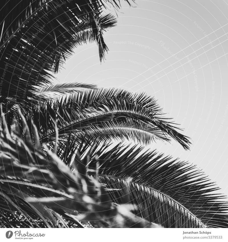 Minimale schwarze Textur im Hintergrund mit Palmenblättern Abstrakter schwarzer Hintergrund Schwarze Textur Minimales Schwarz Minimalismus