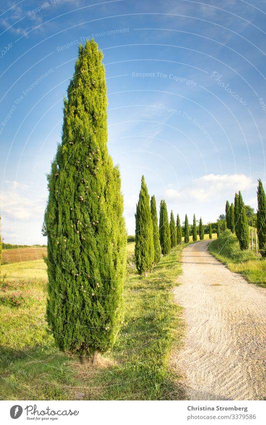 Typisch Toskana Ferien & Urlaub & Reisen Tourismus Ausflug Sommer Sommerurlaub Natur Volterra Italien Italienisch Allee Zypresse Europa Wege & Pfade Erholung