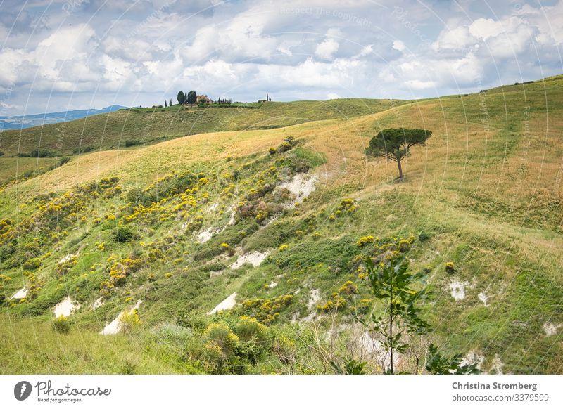 Toskanische Weite Toskana tuscany Italien Italy grün Europa Tourismus Reise Ferien & Urlaub & Reisen Farbfoto Außenaufnahme Menschenleer Landschaft Sommer