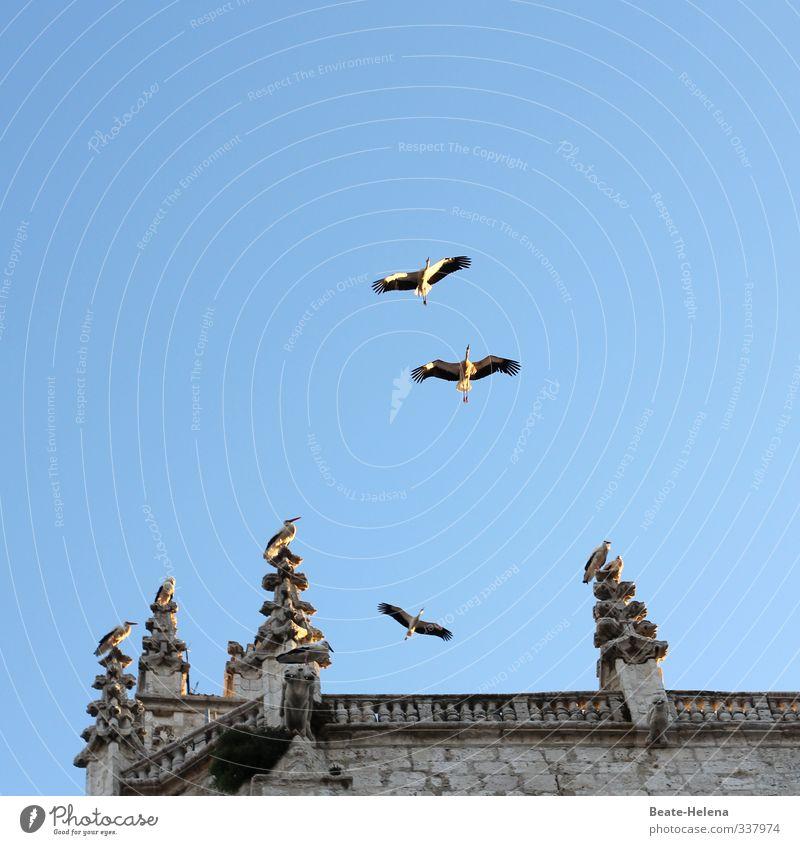 Es sind fruchtbare Zeiten angesagt Ferien & Urlaub & Reisen Tourismus Sommerurlaub Sonne Natur Tier Sonnenlicht Schönes Wetter Spanien Haus Dach Vogel Storch