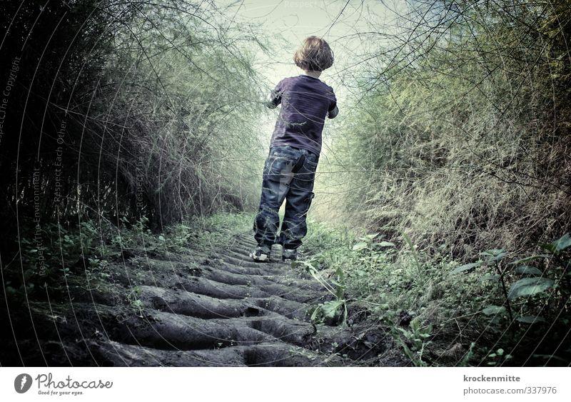 trau dich Mensch Kind Natur grün Pflanze dunkel Gefühle Junge Wege & Pfade gehen Stimmung Angst maskulin Feld Kindheit Erde