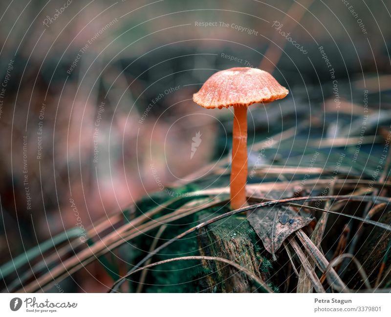 Umwelt Natur Landschaft Pflanze Tier Erde Herbst Baum Gras Moos Blatt Grünpflanze Wildpflanze Wald liegen stehen Wachstum wandern dreckig nass natürlich wild