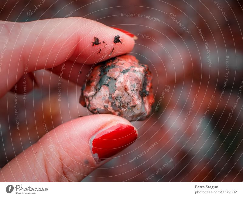 feminin Frau Erwachsene Finger Umwelt Natur Erde Herbst Wald berühren entdecken festhalten dreckig natürlich braun orange rot achtsam einzigartig Erholung Stein