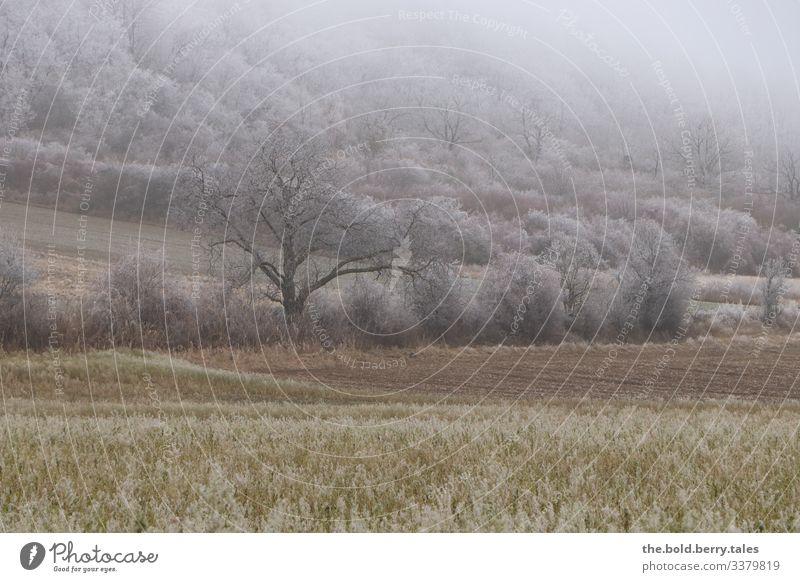 winterliche Landschaft Winter Eis Frost Pflanze Baum Sträucher Grünpflanze Nutzpflanze Feld kalt natürlich Einsamkeit Farbfoto Gedeckte Farben Außenaufnahme