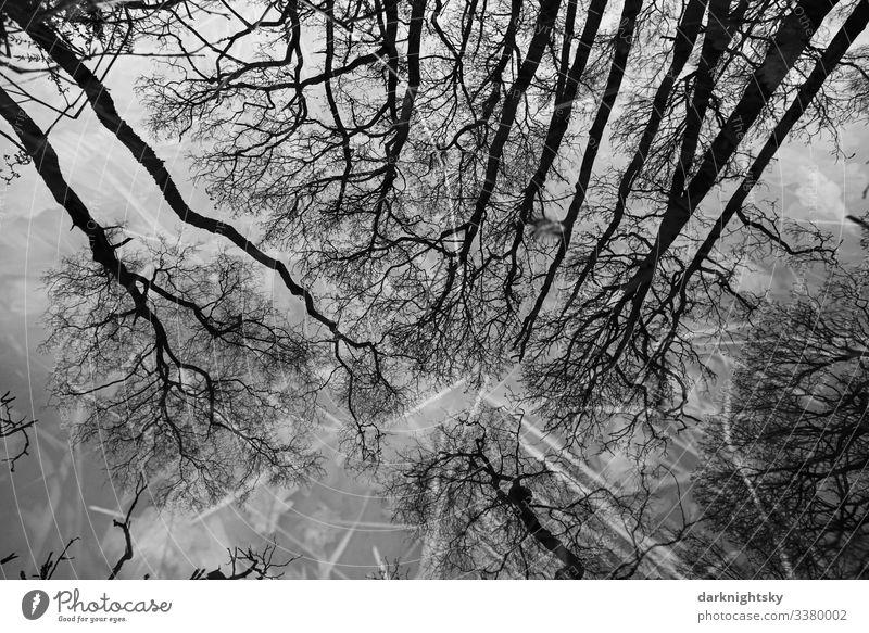 Quercus robur Eichen spiegeln sich in einem Gewässer mit Grashalmen im Moor Natur Wald Winter Umwelt Außenaufnahme Gräser Spiegelung Spiegelung im Wasser Bäume