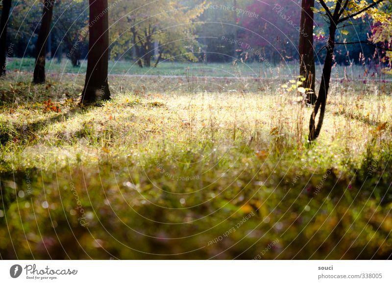 happy days never come loudly Glück Freizeit & Hobby Freiheit Sommer Sonne Natur Sonnenlicht Schönes Wetter Baum Gras Sträucher Park Wege & Pfade atmen