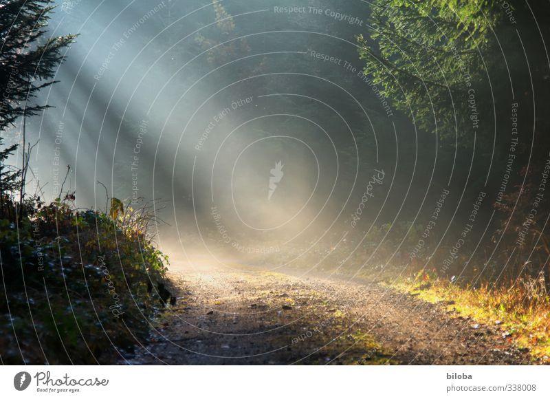 Dieser Weg Umwelt Natur Pflanze Sonne Sonnenlicht Herbst Winter Nebel Wald gelb grün schwarz weiß Wege & Pfade Kurve Sonnenstrahlen Traurigkeit Hoffnung gehen