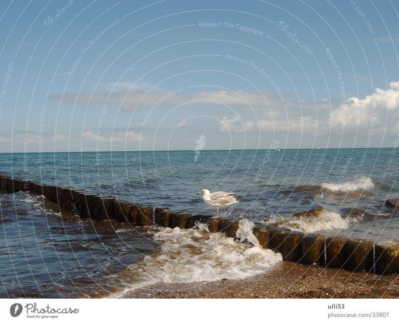 Möve auf der Buhne Wasser Meer Strand Wellen Wind Ostsee Schaum Windgeschwindigkeit