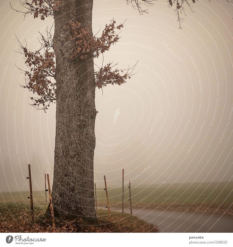 retreat Baum Einsamkeit Landschaft Blatt Herbst träumen Nebel nass Urelemente Vergänglichkeit trocken Verfall Laubbaum Herz-/Kreislauf-System Wegbiegung Rückzug