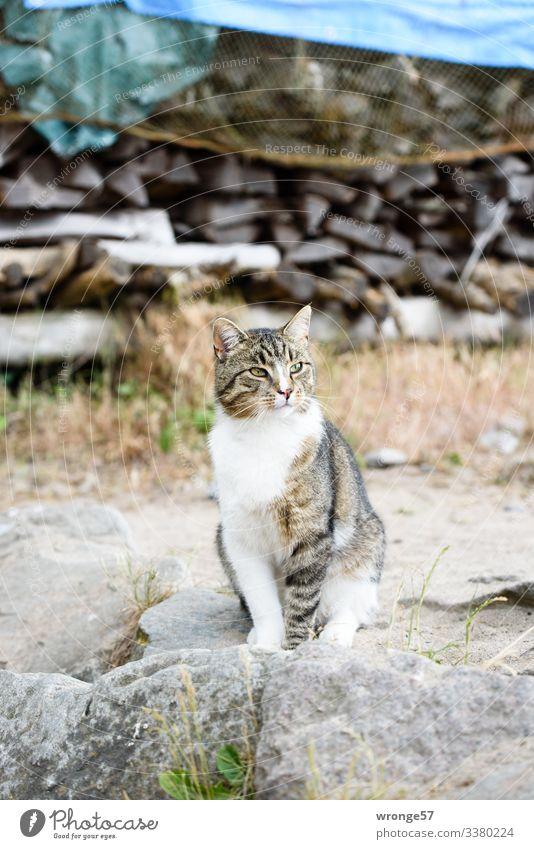 Graue gescheckte Katze am Strand Tier Haustier warten Neugier braun grau sitzen beobachten Farbfoto Gedeckte Farben Außenaufnahme Menschenleer Tag
