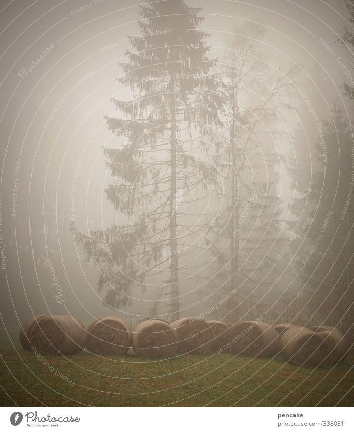 nebelungen Natur schön Baum Landschaft Wald Herbst Gras Feld Nebel Klima authentisch Urelemente Zeichen Romantik geheimnisvoll Sehnsucht