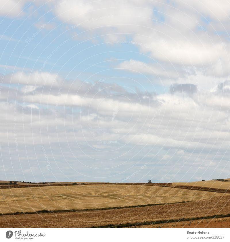 Heiter bis wolkig Himmel Natur Ferien & Urlaub & Reisen blau Pflanze Sommer Sonne Landschaft Ferne braun Arbeit & Erwerbstätigkeit Wetter Feld Wachstum