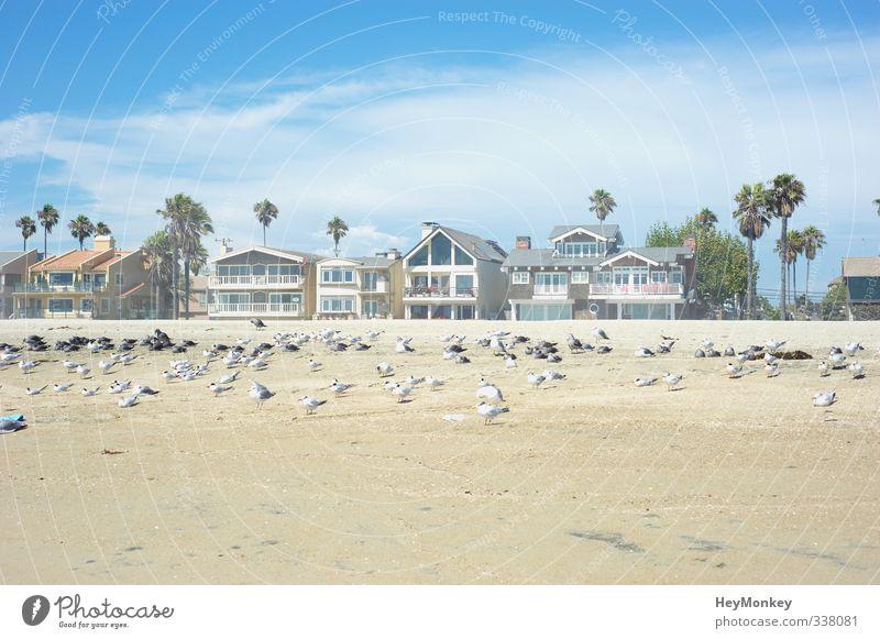 Long Beach Kalifornien Umwelt Natur Landschaft Pflanze Tier Sand Luft Himmel Wolken Sonnenlicht Sommer Schönes Wetter Wärme Baum exotisch Palme Küste Strand