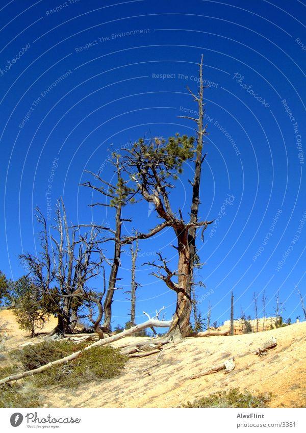 halbtrocken Baum Tod Ast