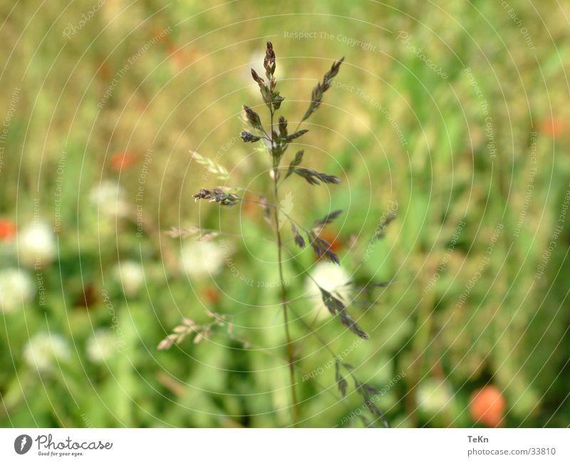 HaLM Halm Unschärfe Gras grün Detailaufnahme Makroaufnahme