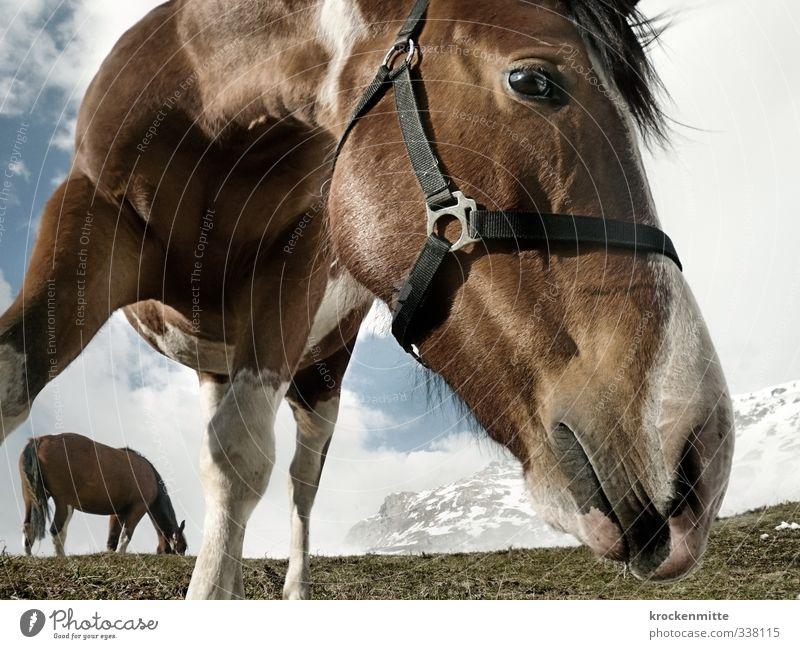 Hörst du mich flüstern? Umwelt Natur Landschaft Himmel Wolken Pflanze Berge u. Gebirge Gipfel Schneebedeckte Gipfel Tier Tiergesicht Pferd Pferdekopf
