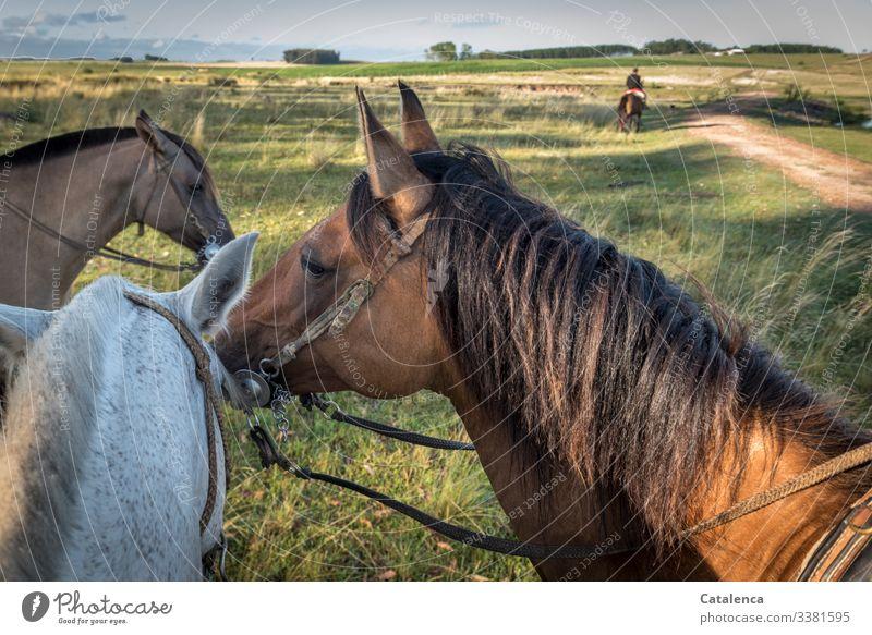 Drei Pferdeköpfe die aus dem Blickwinkel des Reiters fotografiert wurden Tierporträt Starke Tiefenschärfe Tag Außenaufnahme mehrfarbig Farbfoto Nostalgie Natur