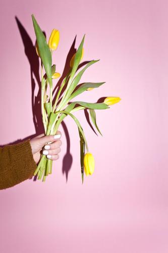 Garten Muttertag Ostern feminin Junge Frau Jugendliche Umwelt Natur Pflanze Klima Klimawandel Tulpe Blühend Duft festhalten kaufen verblüht gelb Freude