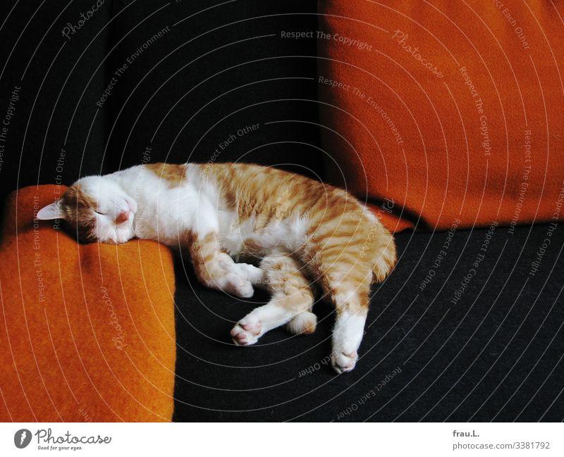 Wie immer Häusliches Leben Wohnung Sofa Wohnzimmer Tier Haustier Katze 1 genießen schlafen träumen schön orange schwarz weiß Kater Decke Kissen Farbfoto