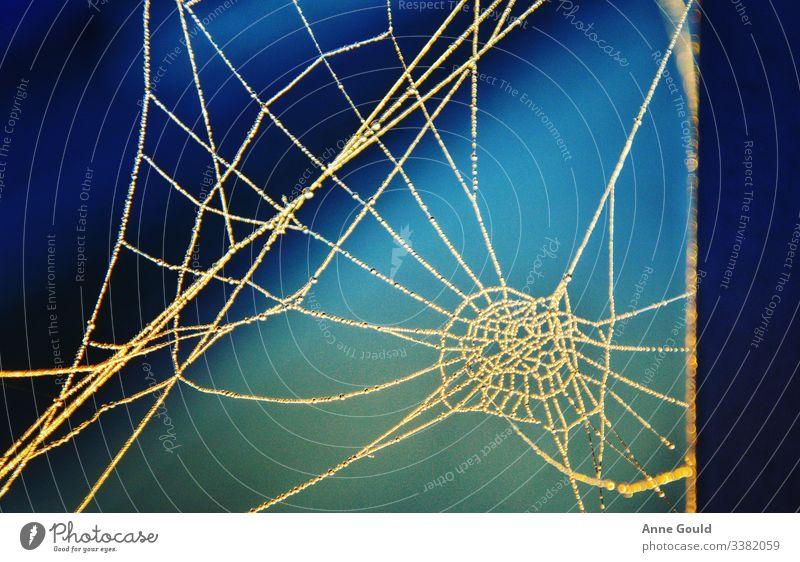 Abstrakt - Spinnennetz abstrakt Herbst Wassertropfen Seil Natur Makro Morgen blau