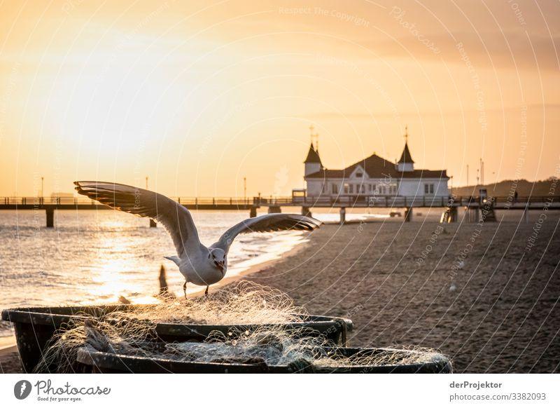 Möwe im Sonnenaufgang vor der Ahlbecker Seebrücke Seeküste Usedom Fischerboot Fischernetz Fischerei Winter Tourismus orange Strand Küste Küstenvogel fliegen