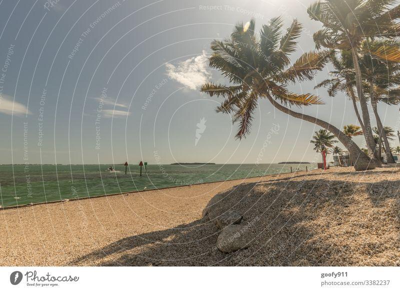 Florida Keys Schönes Wetter Himmel Sonnenlicht Ferien & Urlaub & Reisen Fernweh Außenaufnahme Farbfoto Ozean Küste Freiheit Ferne genießen Tourismus Meer