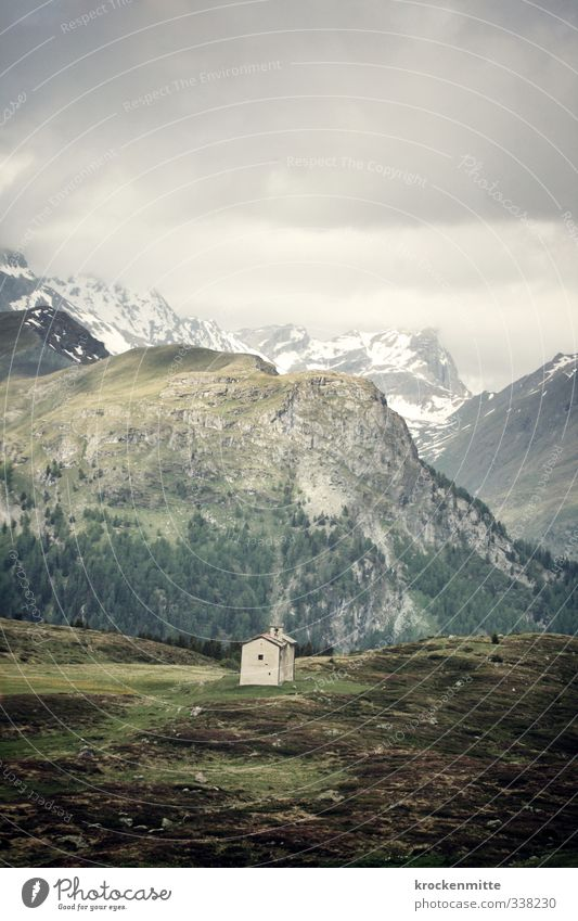 Alpsegen Umwelt Natur Landschaft Erde Himmel Wolken Gewitterwolken schlechtes Wetter Nebel Sträucher Moos Hügel Felsen Alpen Berge u. Gebirge Gipfel
