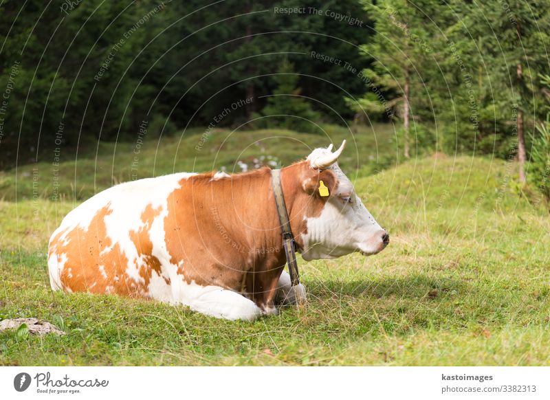 Kuh, die auf einer Alpweide weidet, Slowenien. Rind Viehbestand Gras Bauernhof Alpen Natur Wiese Berge u. Gebirge im Freien Himmel Sommer Weide Molkerei grün