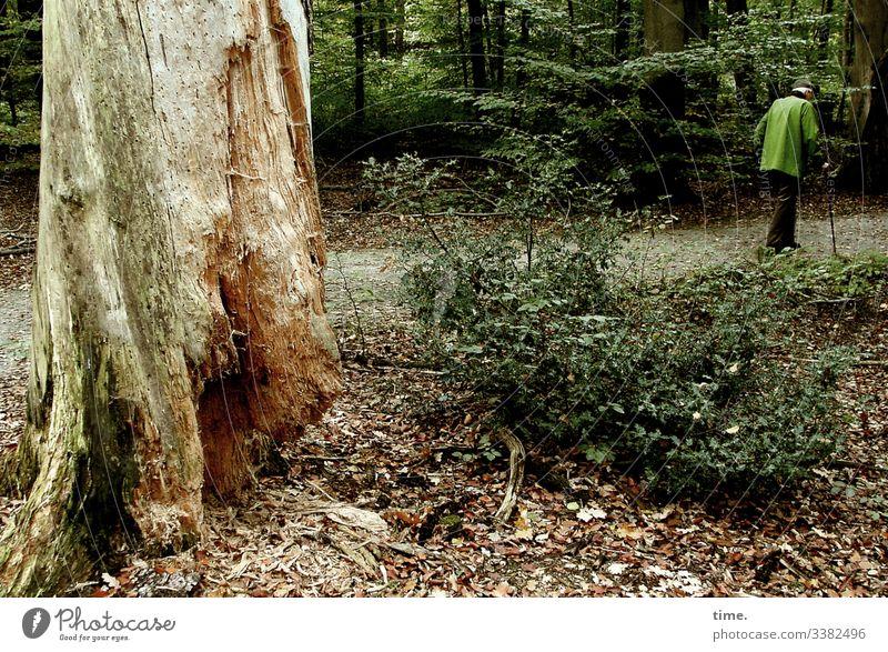 Heimweg wald baum totholz waldweg mann spazierengehen gehstock jacke busch unterholz alt grün gebückt bäume unterwegs heimweg laub herbst lebendigkeit
