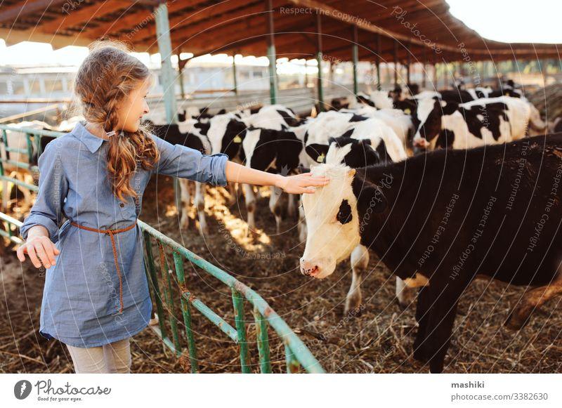 Mädchen, das auf einer Kuhfarm Kälber füttert. Land, ländliches Leben, Landwirtschaftskonzept Kind Bauernhof Natur Rind Ackerbau im Freien Landschaft Wade