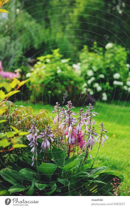 schöne Aussicht auf den Sommergarten, Mischbeet mit Hosta, Koniferen, Hortensien und anderen Sträuchern und Blumen Borte Garten gemischt gemischte Grenze