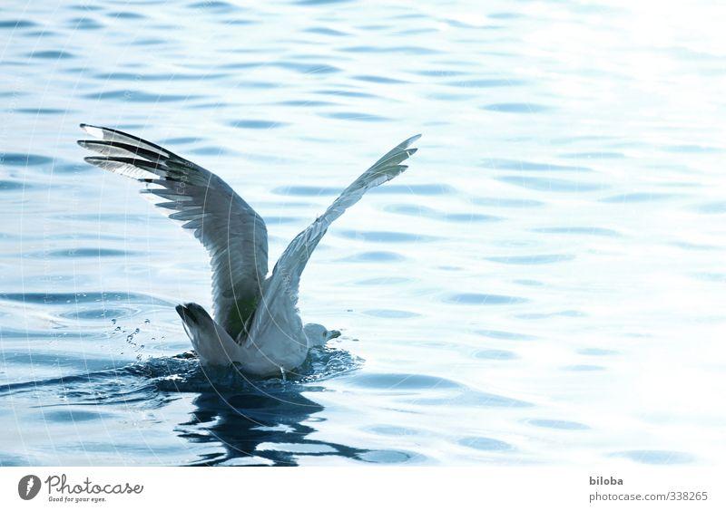 Bauchlandung Wellen Nordsee Vogel Möwe Wasser Tropfen fliegen Landen Textfreiraum rechts Bewegungsunschärfe