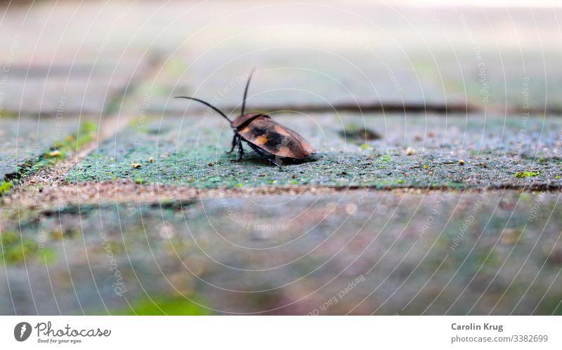 Exotischer Käfer Glück Indien Auroville Fühler Insekt krabbeln Makroaufnahme Natur Beine Marienkäfer Unschärfe Glücksbringer Kleinigkeit tiefenschärfe gering
