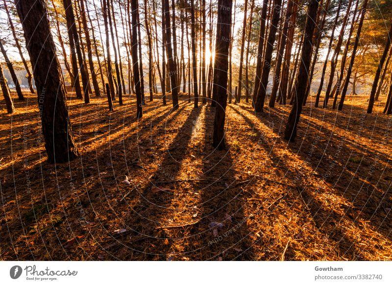 Sonnige Morgendämmerung im Wald Frühling Sonnenlicht im Freien Park grün Sonnenaufgang Sommer Rochen Licht Sonnenschein malerisch Szene schön Natur Landschaft