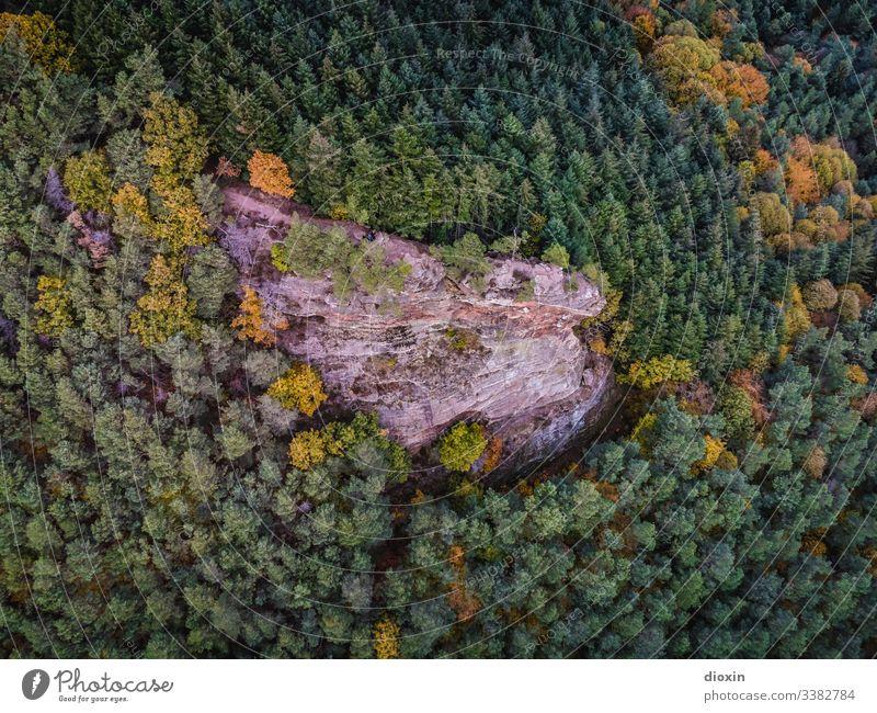 Gigantische Felsformation umgeben von mitteleuropäischem Mischwald Wald Bäume Felsen Sandstein Natur Landschaft Außenaufnahme Berge & Gebirge Mittelgebirge
