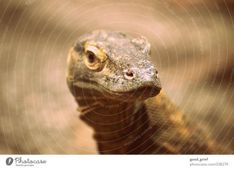 urzeittier Umwelt Landschaft Pflanze Tier Urelemente Wildtier Zoo nackt Leguane Schuppen Reptil Auge Nase Ohr Haut braun Leder Farbfoto mehrfarbig Außenaufnahme