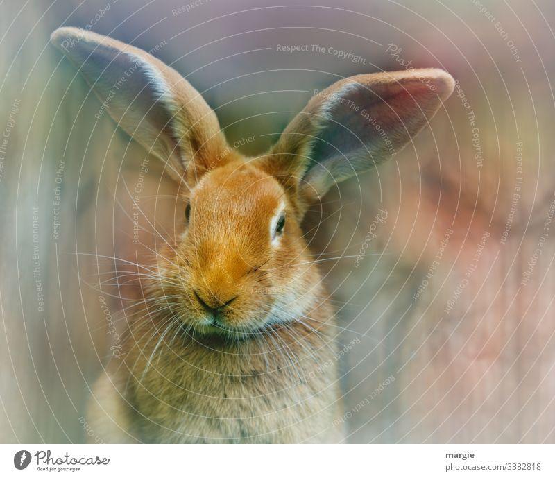 (Oster) Hase wartet auf Ostern Nase +Stall Blick nach vorn Totale Zentralperspektive Schwache Tiefenschärfe Unschärfe Textfreiraum links Menschenleer