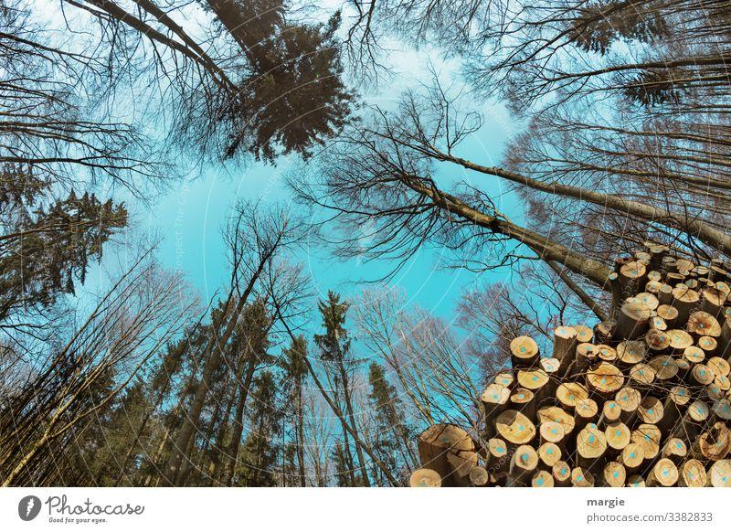 Holzwirtschaft: Bäume wachsen in den Himmel Energiekrise Umwelt Natur Baum Wald sparen mehrfarbig grün Vergänglichkeit Wachstum Wandel & Veränderung Zukunft