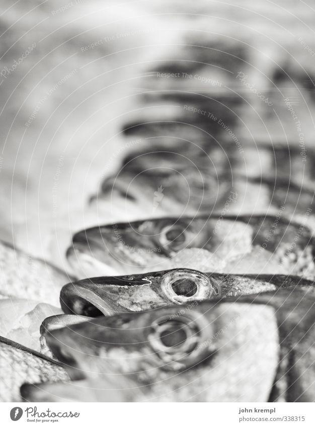 (H) echt Meer Tier Tod Schwimmen & Baden liegen Tiergruppe kaufen Fisch Appetit & Hunger Markt Schwarm Meerestier