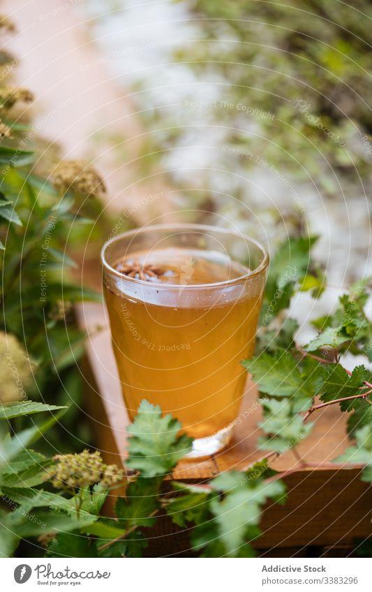 Köstliches Kräutergetränk mit Anis im Garten Kräuterbuch trinken Gesundheit Getränk Glas natürlich Tee liquide Saft lecker frisch Erfrischung Vitamin süß heiß