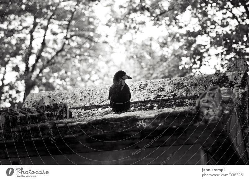 totenvogel Paris Frankreich Bauwerk Grab Grabmal Grabkammer Tier Vogel 1 hocken historisch trist Treue Romantik Hoffnung Glaube Traurigkeit Trauer Tod Sehnsucht